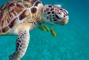 Comment organiser un voyage aux Maldives
